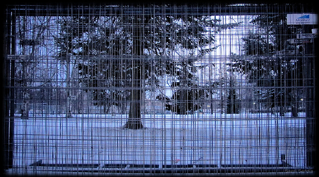 caged winter