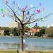 A to Z Tree ..