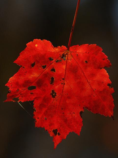 Autumn's Passion