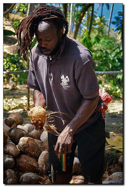 Kokosnussrupfen