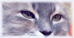 Un regard de félin