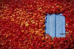 .the blue window ...