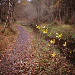 November at Tversted Søerne