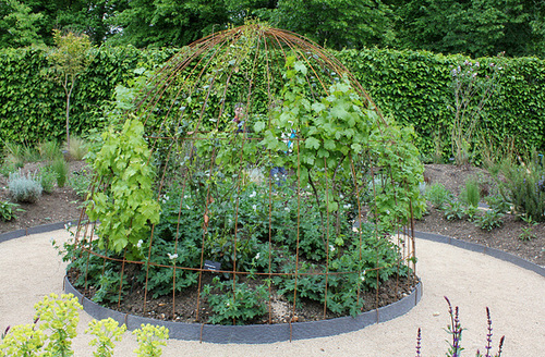 Terre à sons - Jardin 23 - Vignes et Geranium phaeum
