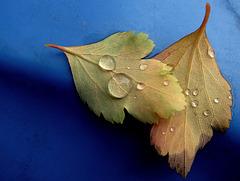 Blätter an Mülltonne