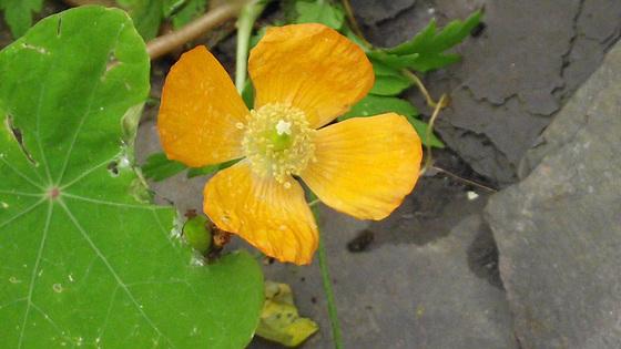 Last surviving flower in the garden