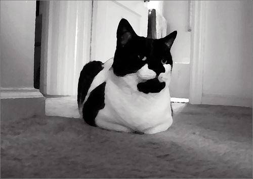 Oreo, posed