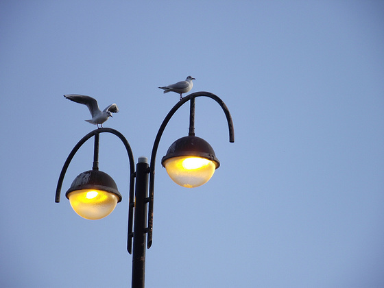 The curvy street lights