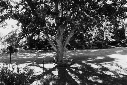 Beal Garden Tree
