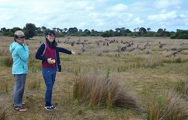 Yok and Pegg and the kangaroos