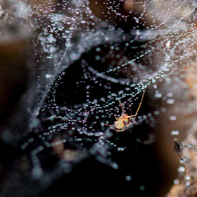 Celestial Spider in Star-Laden Web
