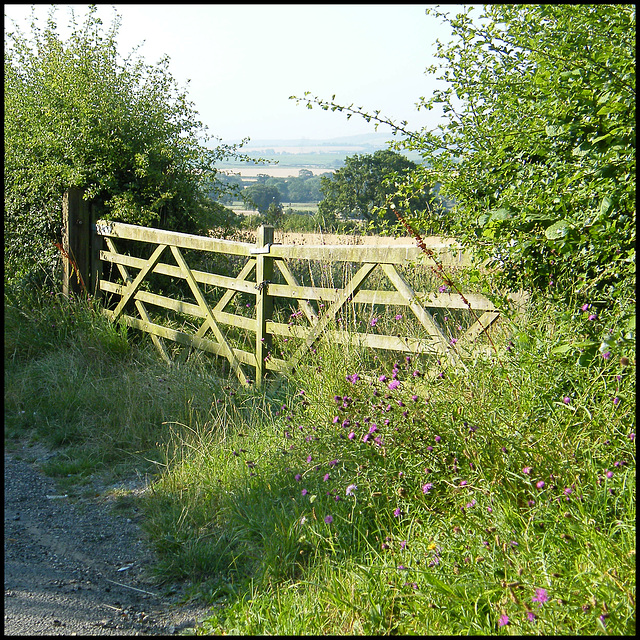 country field gate