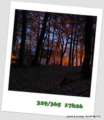 24/11    promenons nous dans les bois ..