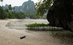 mangroves at Railay