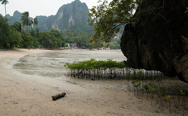 mangroves at Railay