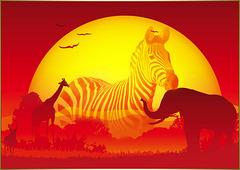 Safari (chiche)