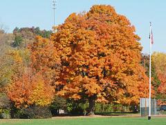noplace does foliage like New England