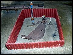 Ausgrabungsarbeiten rund um einen Wal - Kadaver
