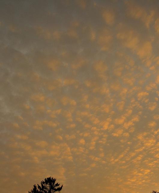 Schäfchenwolken - eine ganze Herde...