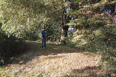 sub arboj (unter Bäumen)