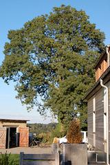 domfronto kun arbo (Hausfront mit Baum)