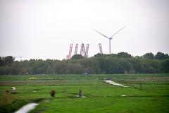 Unemployed cranes