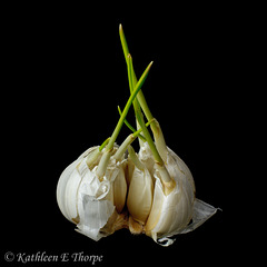 Garlic Cloves on Velvet SOOC