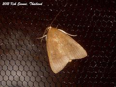 KS019  Unidentified Noctuid