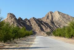 Sidarbäume im Wadi Bih (PiP)