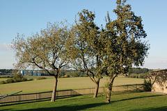 arboj, kampoj (Bäume,  Felder)