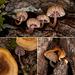 Mini Mushroom Medley (3 insets below and notes) :D
