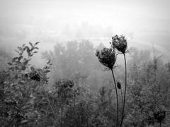 la Langa Cebana in autunno