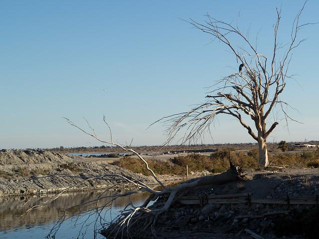 Salton Sea Beach (0756)