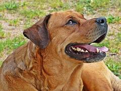 Dana 5 ans, sourire de chien.