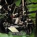 Automuseum von Fritz B. Busch – Mercedes-Benz 300 Adenauer