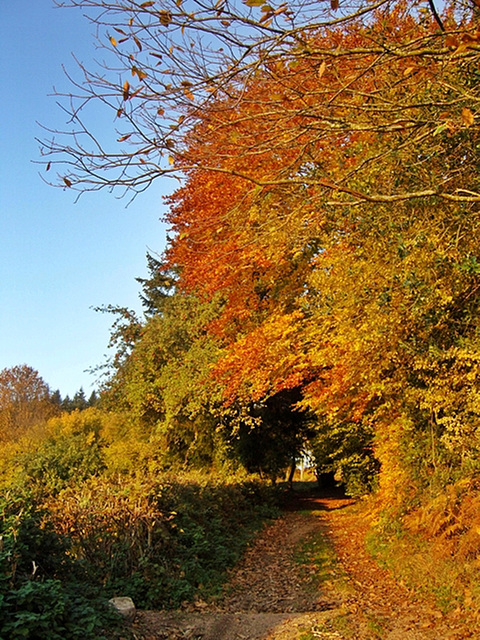 cheminement d'automne