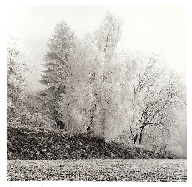 Ein Wintergruß
