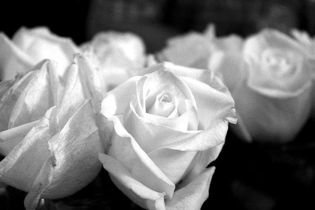 Roses, rehearsal dinner 1