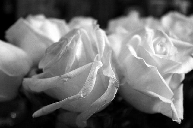Roses, rehearsal dinner 2