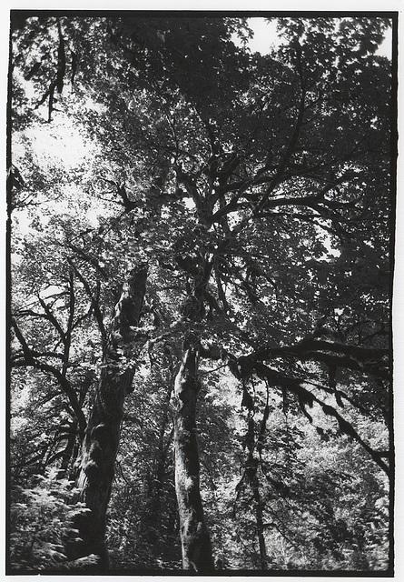 Dosewallips Forest