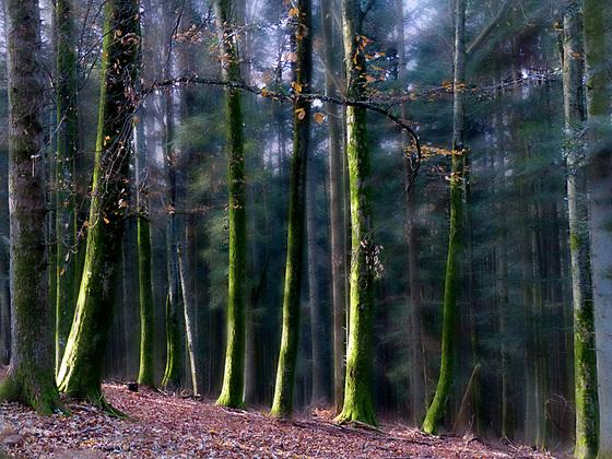 dans la forêt lointaine : la marche des verts