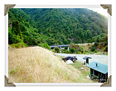 Our campsite in Waioeka Gorge 2
