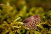 Acorn Cap Nestled in Moss