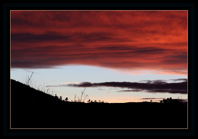 Arbres timides sous un ciel rouge