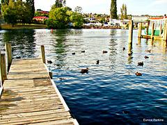 Taupo wharf