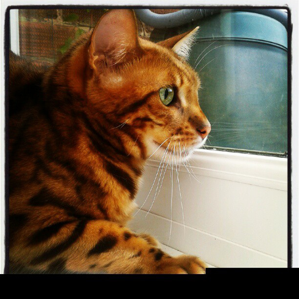 Bindi bird-watching! And me playing with my new mobile :-)