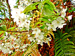 Blossom and ferns