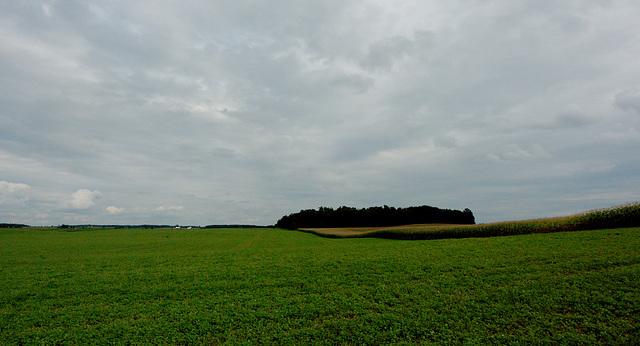 Field & Sky
