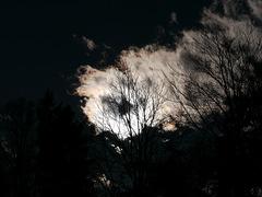 Schattenbäume 2