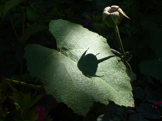 Flor emergiendo